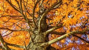 sonbahar,ağaç,yaprak