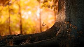 sonbahar,ağaç,kelebek