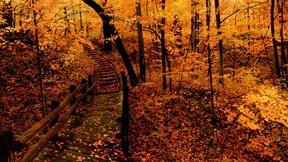 sonbahar,ağaç,orman,yaprak,köprü