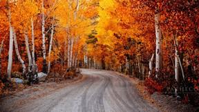 sonbahar,orman,kızıl,ağaç
