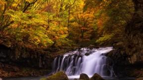 sonbahar,şelale,ağaç,orman