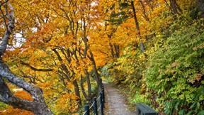 sonbahar,ağaç,orman