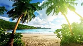 yaz,tropikal,ağaç,kumsal,deniz