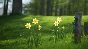 yaz,çiçek,doğa,orman