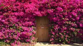 yaz,çiçek,pembe