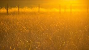 yaz,yaban otu,güneş
