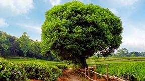 yaz,ağaç