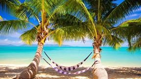 yaz,ağaç,tropikal,deniz,kumsal