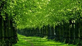 yaz,ağaç,yol,yeşil