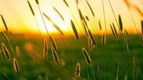 yaz,günbatımı,başak