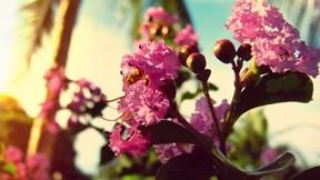 yaz,çiçek,mor