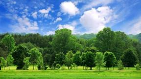 yaz,orman,güneş,ağaç,doğa