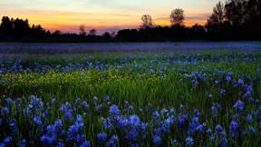 yaz,günbatımı,çiçek