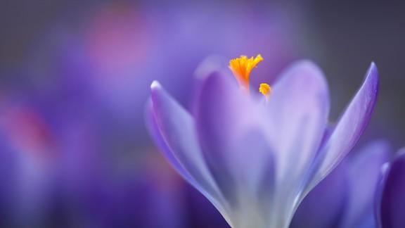 Makro Mor Çiçek
