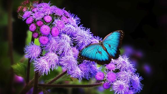 Mor Çiçek ve Kelebek