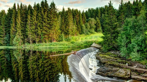 Orman Şelalesi