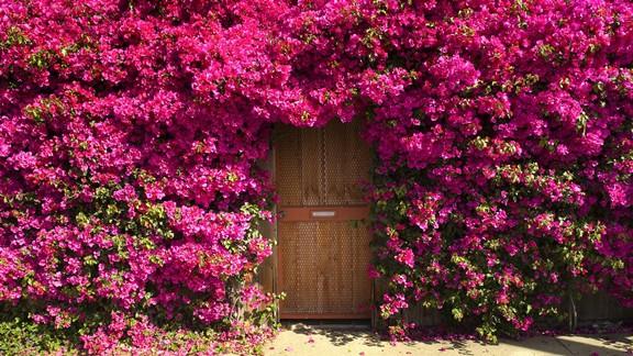 Pembe Kapı Çiçekleri