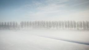 kış,kar,ağaç,tipi