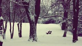 kış,kar,park,ağaç