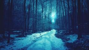 kış,kar,gece,orman,yol,ağaç