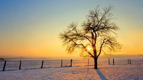 kış,kar,günbatımı,ağaç